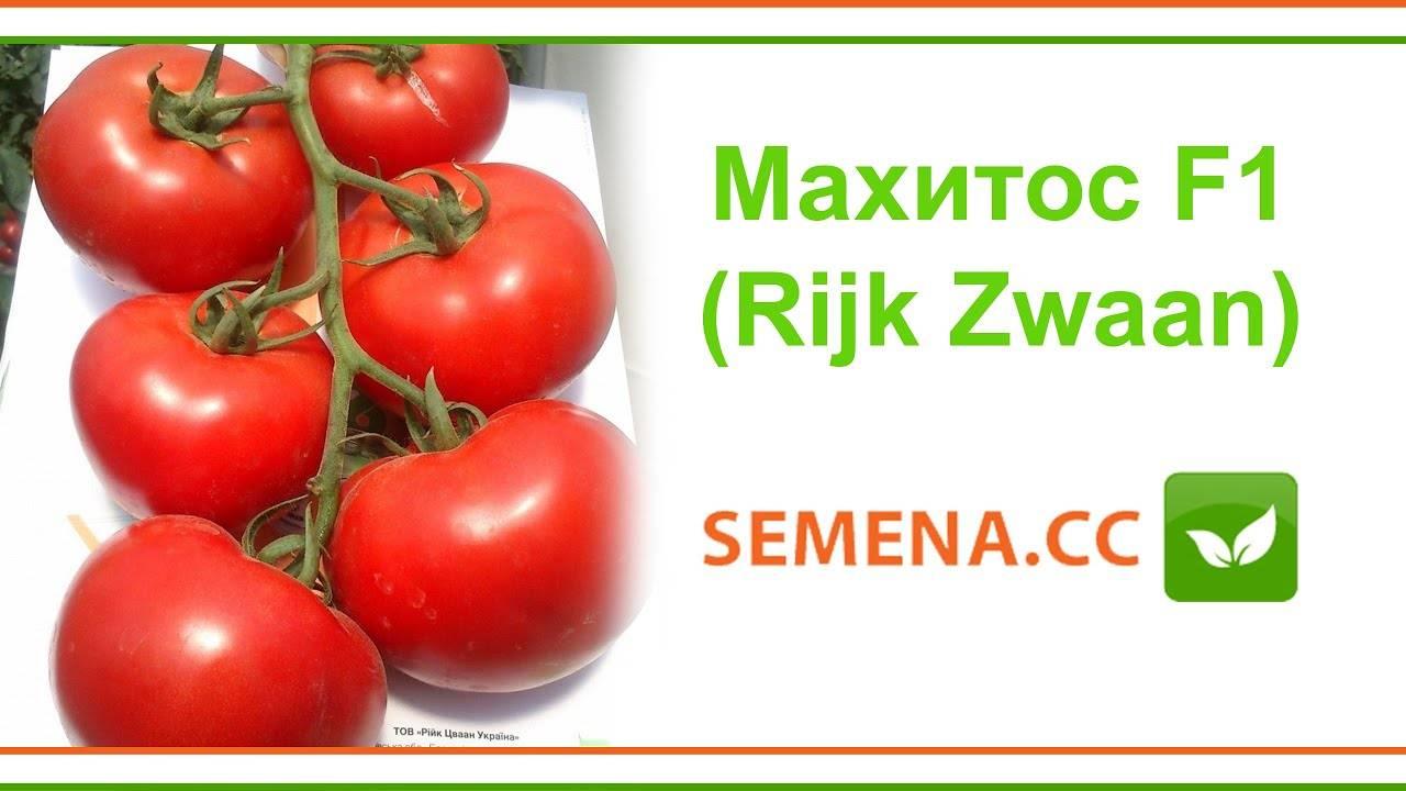 Крупноплодные голландские гибридные томаты «махитос»: секреты грамотного ухода для получения обильного урожая
