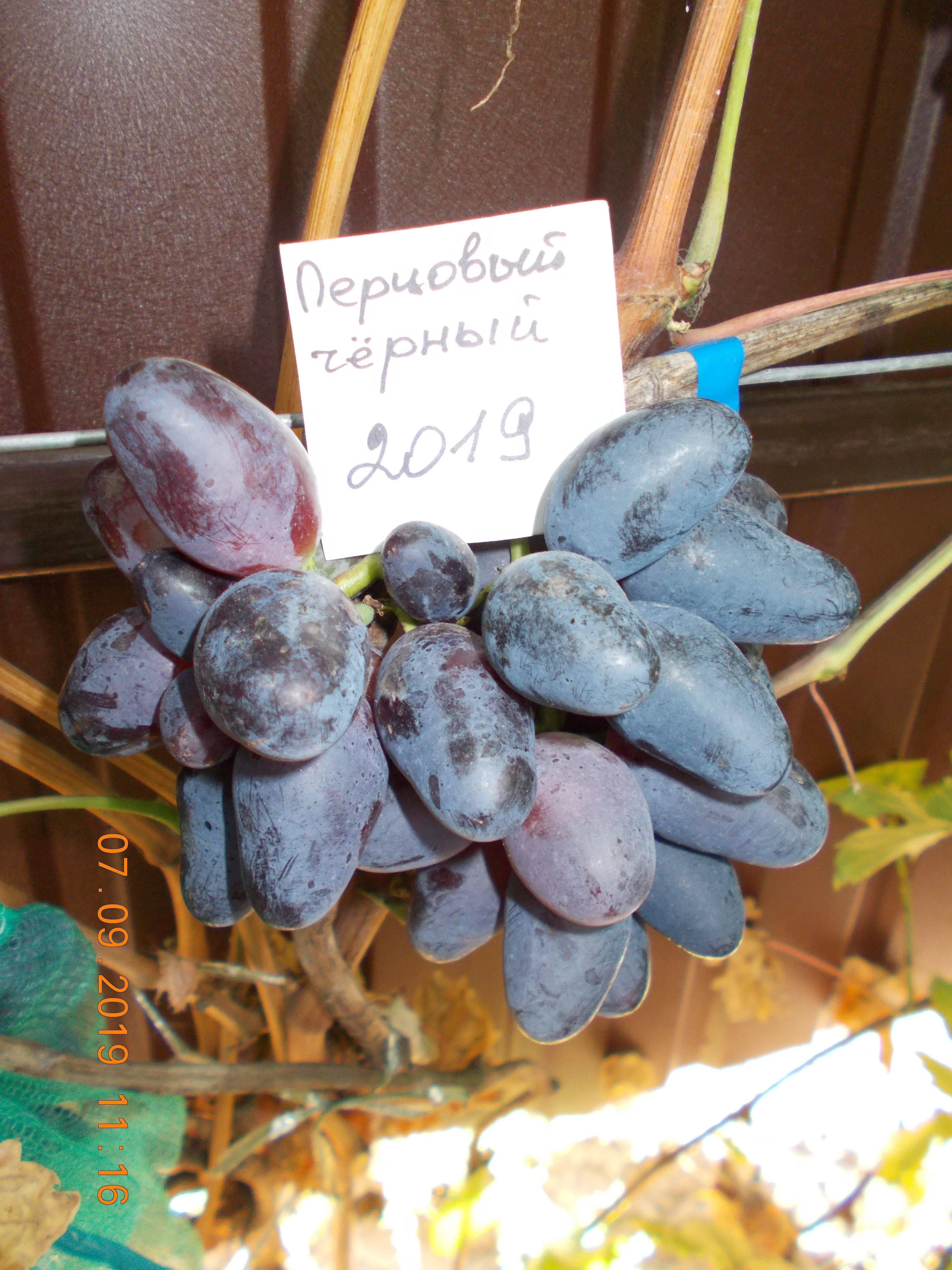 Описание гибридной формы винограда «Эверест»