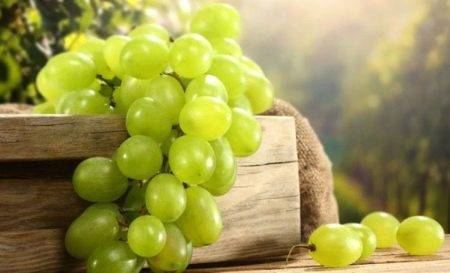 Черный виноград вред и польза при болезнях, лечение и профилактика