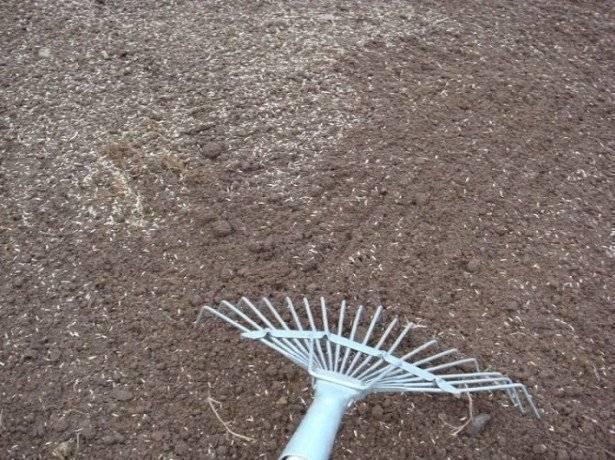 Как сеять газонную траву?