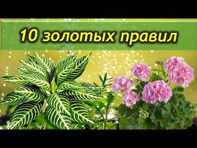Как ухаживать за цветами? как ухаживать за цветами - советы флориста