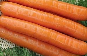Посадка семян моркови под зиму: лучшие сорта и агротехника