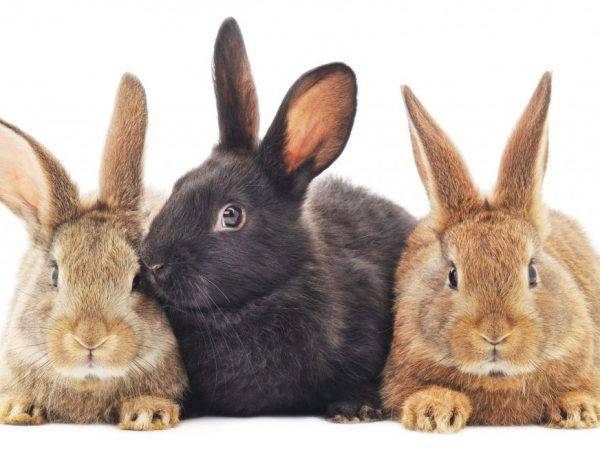 Когда можно и нужно отсаживать крольчат от крольчихи и как это сделать