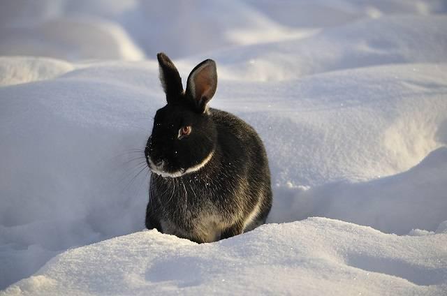 Как содержать кроликов зимой на улице