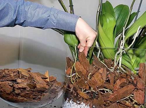 Подготовка коры для орхидей