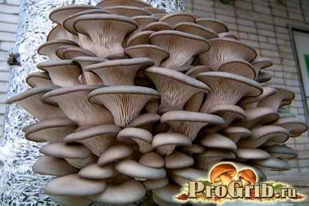 Бизнес-план по выращиванию грибов
