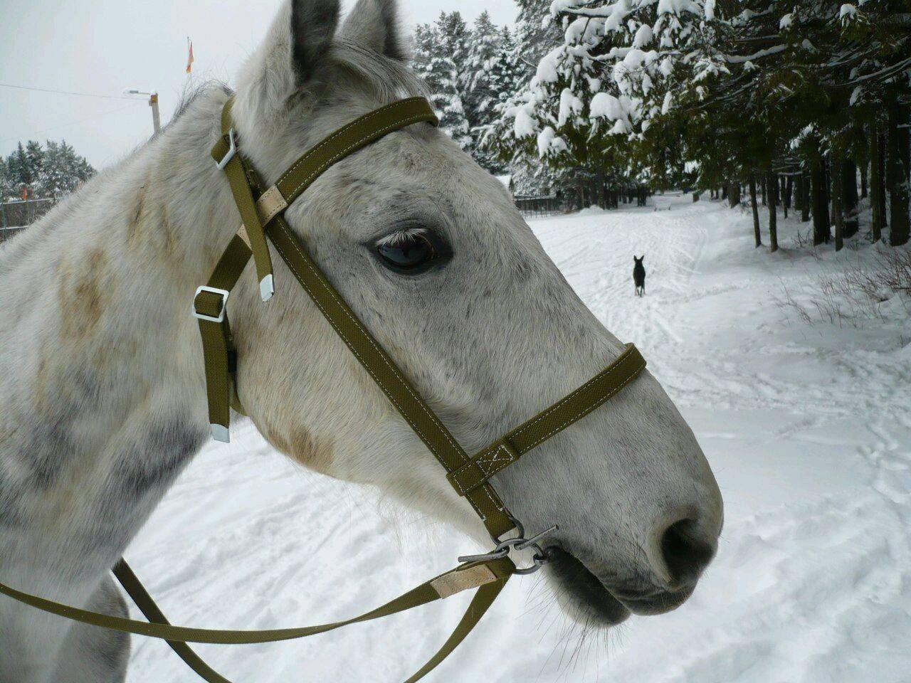 Что такое уздечка для лошади