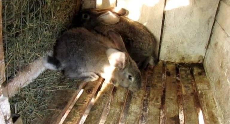 Лебеда для кроликов. польза от неё. описание с фото и видео