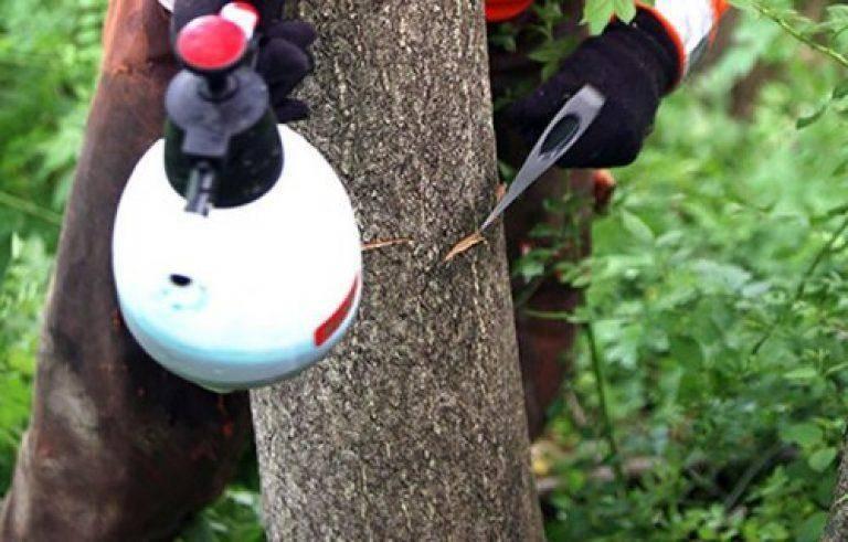 Как уничтожить дерево, не спиливая его: все возможные способы избавиться от древесных насаждений, а также убрать их поросль, не прибегая к вырубке