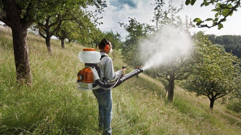 Обработка яблони мочевиной: польза, правила, растворы для подкормки и опрыскивания