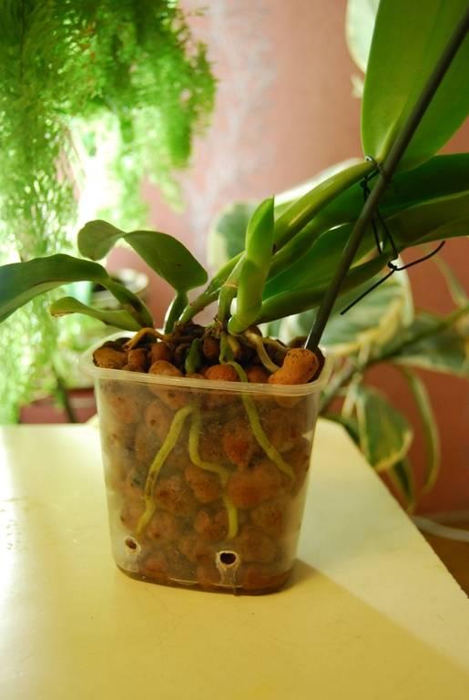 Грунты и добавки к ним для орхидей: нужен ли керамзит, активированный и древесный уголь, вермикулит, кремневит и торф, как их применять, отзывы от специалистов