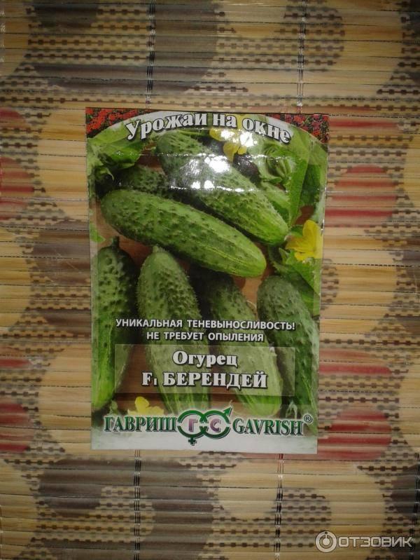 Огурцы берендей f1: отзывы, выращивание на подоконнике, описание сорта, урожайность и преимущества