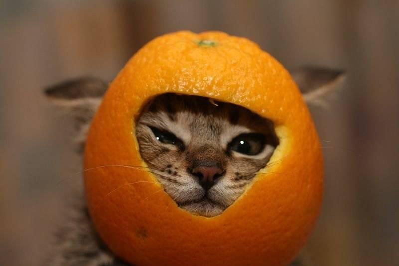 Какой запах не любят кошки и в чем причина: травы, специи, продукты