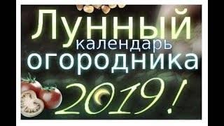 Лунный календарь для посадки кабачков в 2019 году