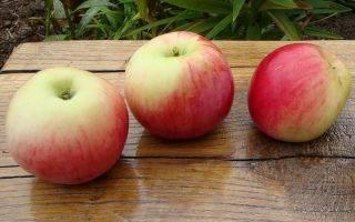 Мельба — лазурный сорт яблони