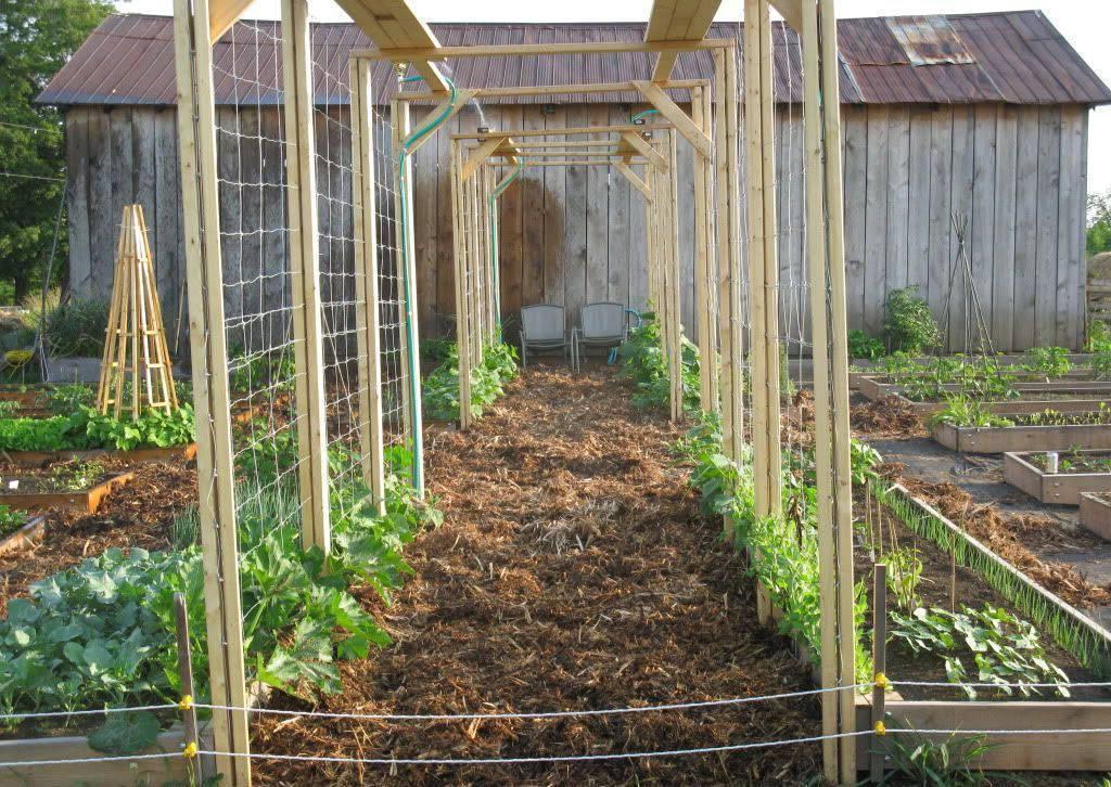 Выращивание огурцов в открытом грунте на шпалерах | растениеводство