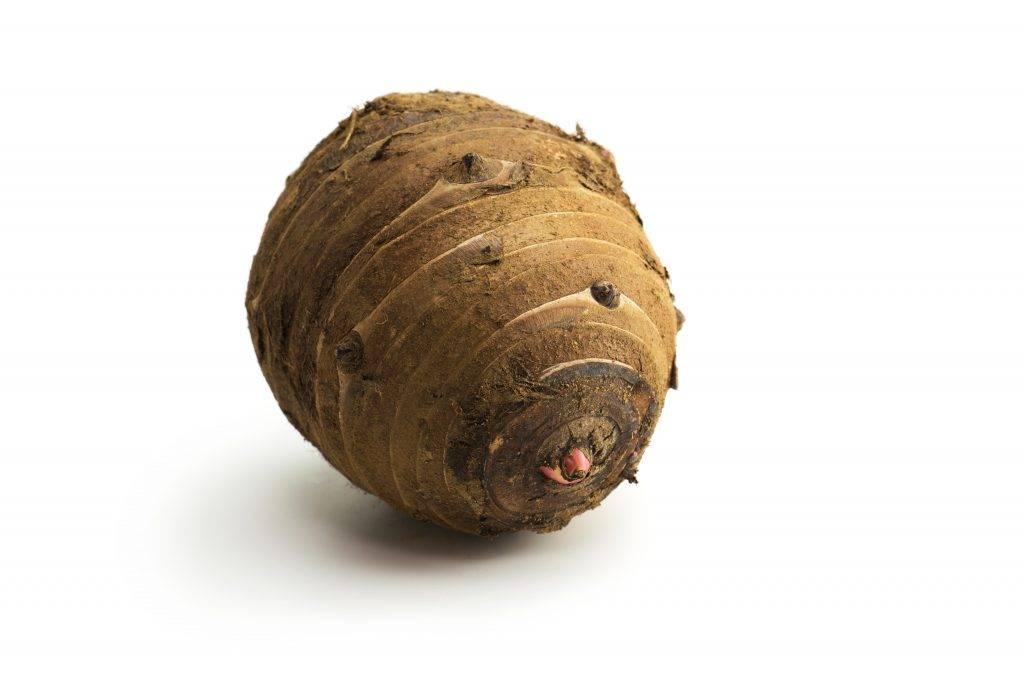 Выращивание картофеля по-китайски: посадка и уход за кустами