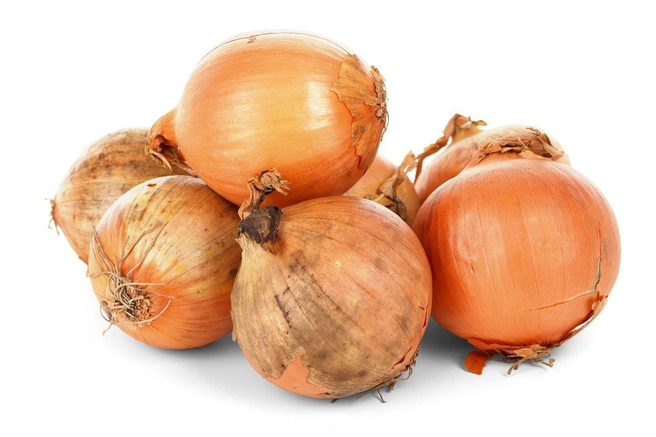 Лук-севок штутгартер ризен: описание сорта, выращивание из семян