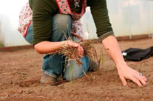 Чем обработать землю в парнике: подробная инструкция