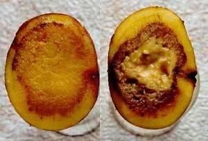 19 болезней картофеля: фото, описание, причины, лечение и профилактика