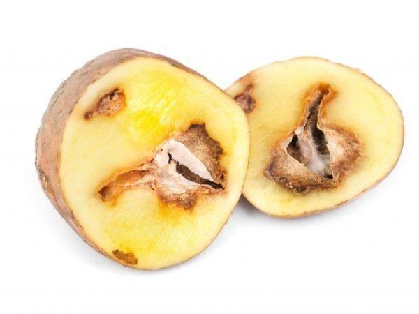 Почему чернеет картошка внутри и можно ли ее есть
