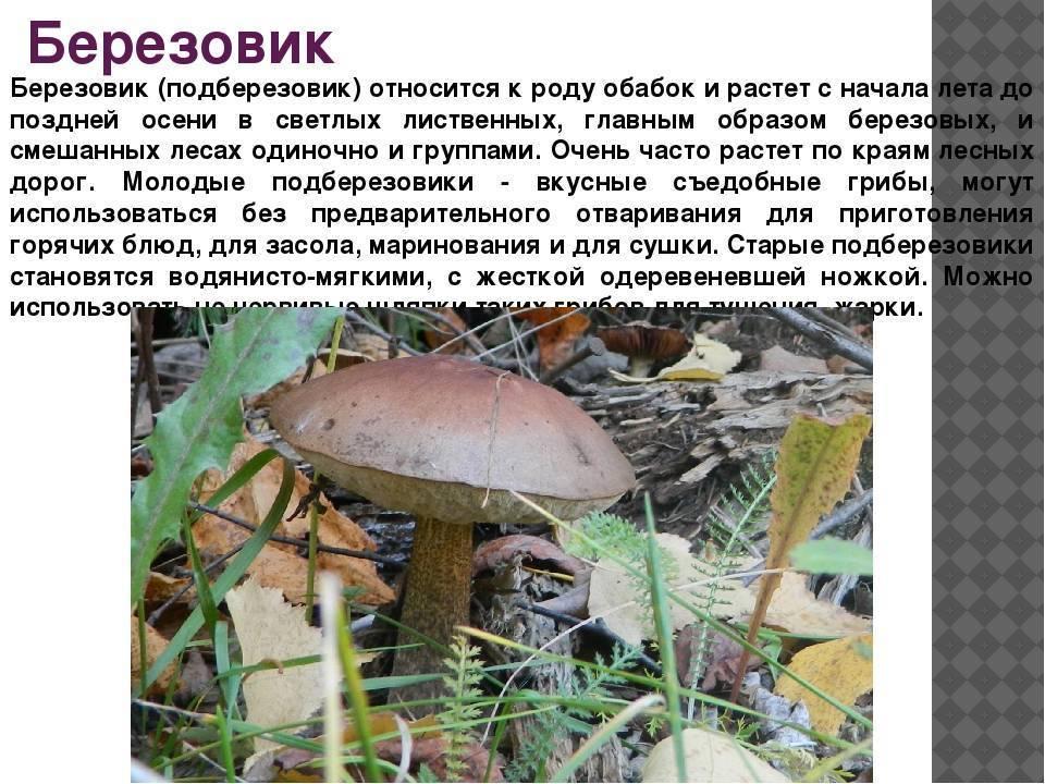 Съедобные грибы – фото и название, виды, описание