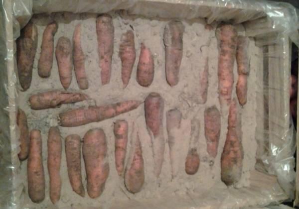 Как правильно хранить морковь зимой в погребе (подвале), сорта