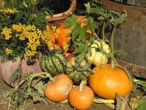Выращиваем рассаду тыквы по правилам. когда сажать? выращивание в домашних условиях — ботаничка.ru