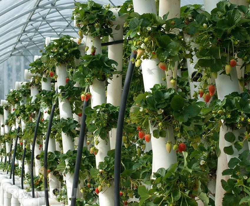 Вертикальные грядки для клубники своими руками: преимущества выращивания