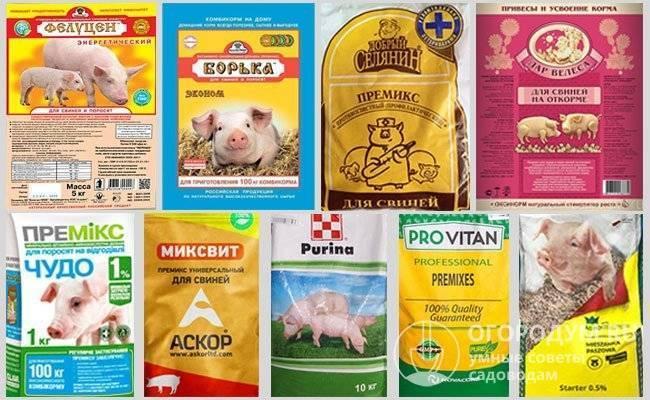 Стимулятор роста для свиней: описание бмвд и премиксов. кормовые добавки для быстрого роста поросят. инструкция по применению