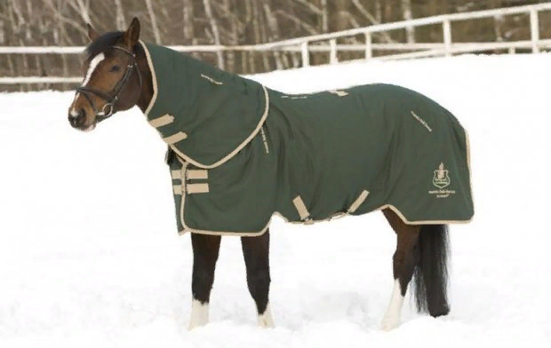 Амуниция для лошадей — полный список снаряжения