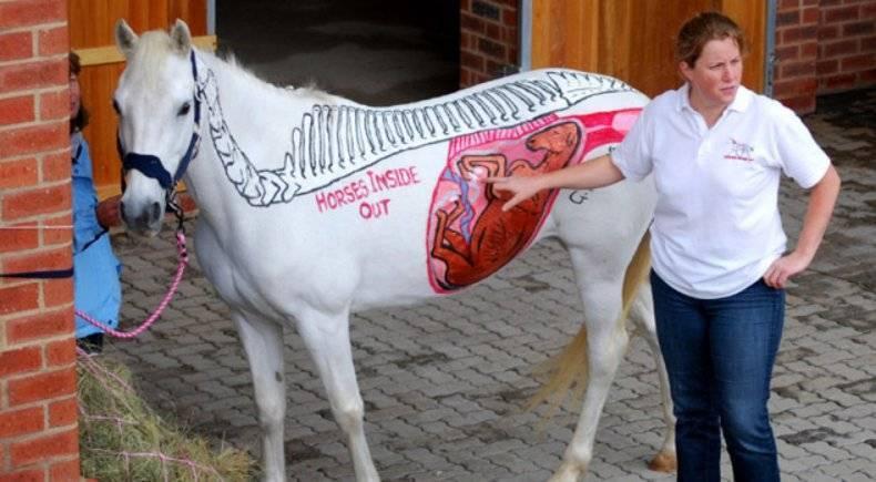 Беременность и роды лошади: сколько длятся и как проходят