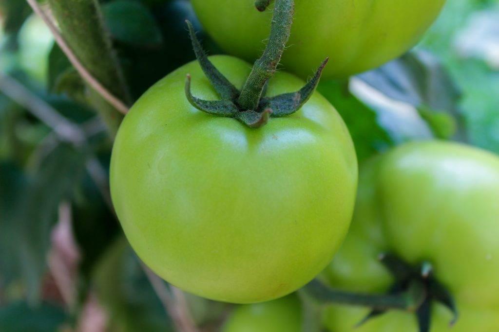 Какая подкормка требуется для томатов в период плодоношения