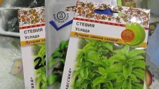 Выращивание стевии в домашних условиях из семян