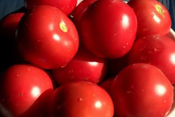 Выносливый, красивый, урожайный сорт для ваших грядок — томат «багира f1»
