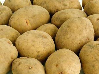 Картофель сорта адретта - описание и характеристики