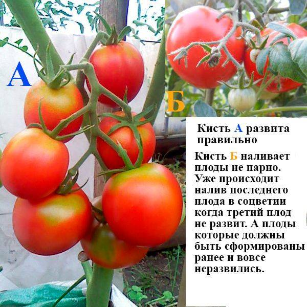 Чем подкормить огурцы в период плодоношения для отличного урожая