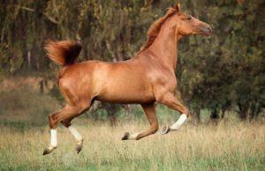 Зачем нужно и как правильно подковывать лошадь, виды конструкций