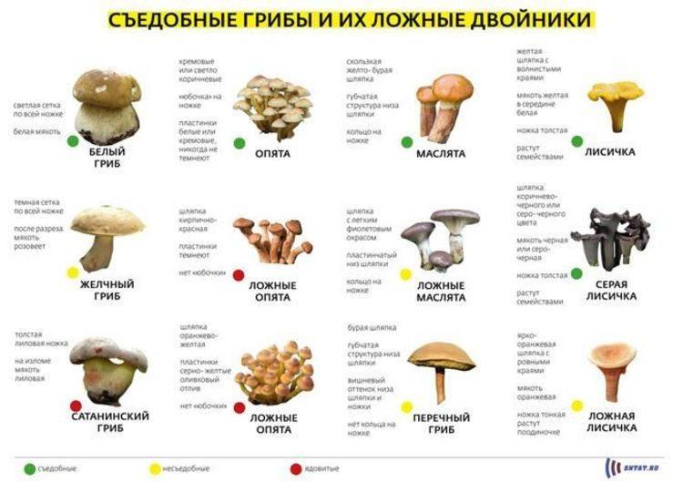 Сбор грибов в 2021 году — чем богата кировская область