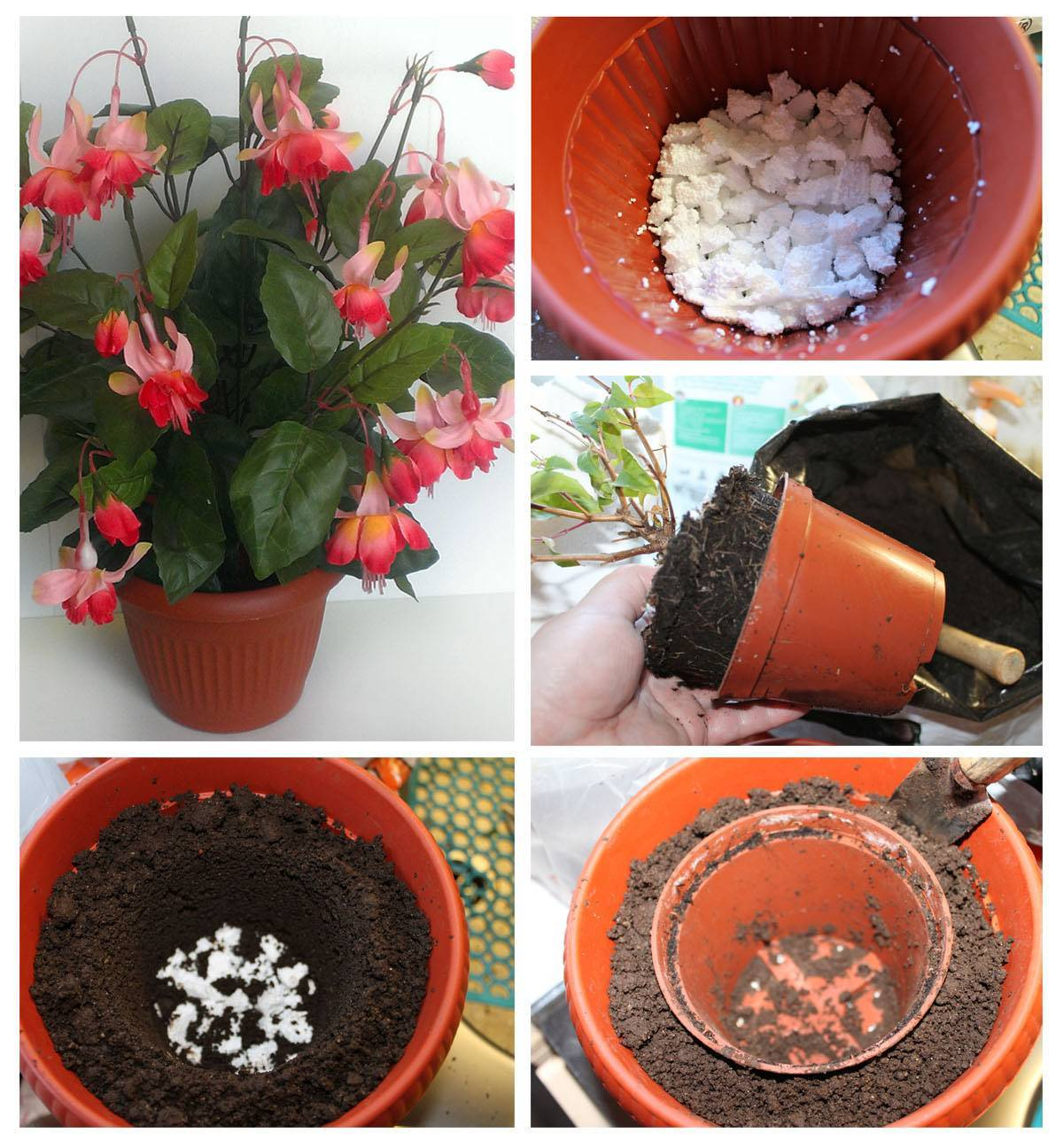 Как происходит размножение фуксии в домашних условиях? особенности выращивания и содержания цветка в этот момент