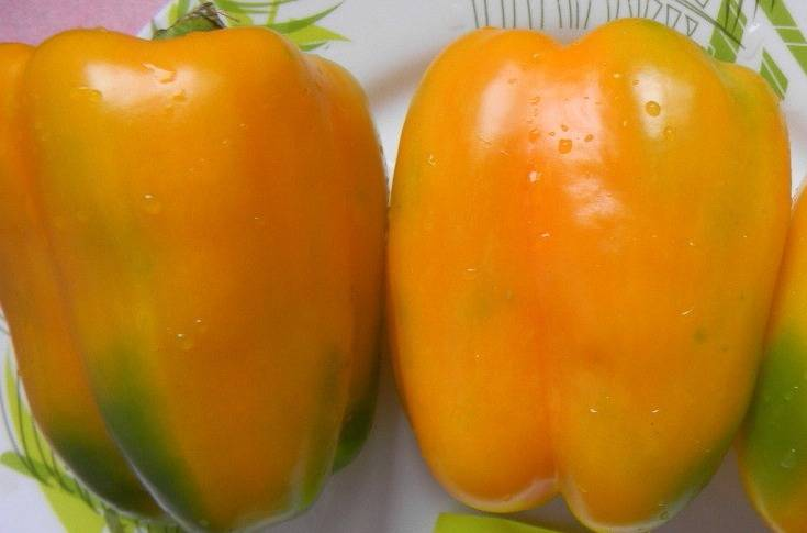 Популярные сорта перца: для открытого грунта, для теплиц, для сибири, отзывы