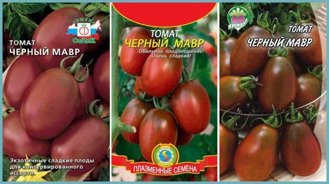 Специфика выращивания, характеристика и описание томата черный мавр