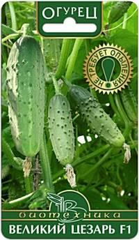 Сорта огурцов для открытого грунта, в том числе кустовые и холодостойкие