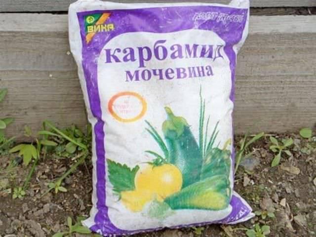 Мочевина как удобрение: применение на огороде