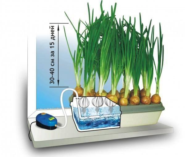 Выращивание зелени на гидропонике в домашних условиях: достоинства, оборудование, приготовление питательного раствора, технология, правила ухода
