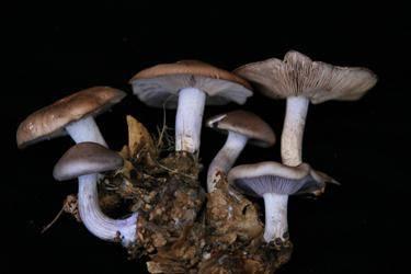 Особенности шляпочных грибов