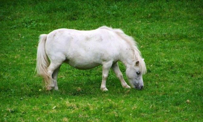Топ-10 самых маленьких лошадей в мире