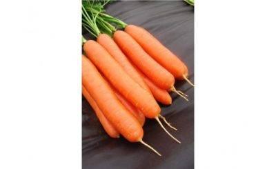 Как посадить морковь при помощи ленты из туалетной бумаги: плюсы и минусы метода, как выбрать семена, на что и чем клеить, как расположить, правила посадки и ухода