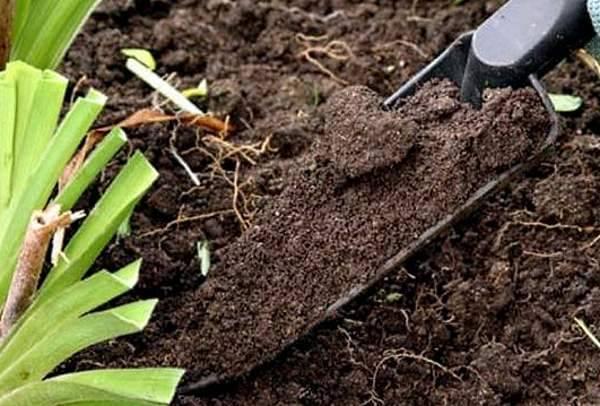ᐉ как подкислить почву для комнатных растений - ogorod-u-doma.ru