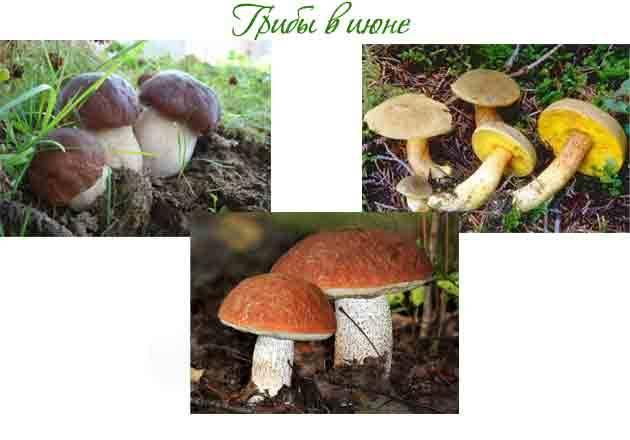 Осенние грибы 2020 в сентябре и октябре: съедобные виды, фото и картинки, названия